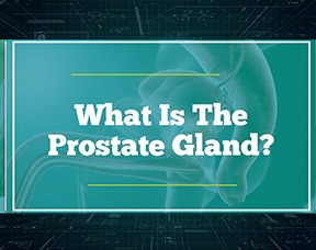What Is The Prostate Gland?