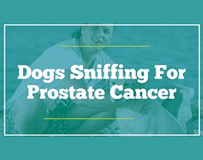 Dogs Sniffing For Prostate Cancer